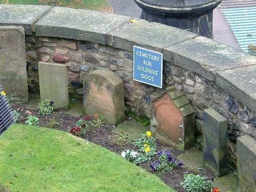 """""""cemetery for soldiers' dogs at Edinburgh castle"""" This is amazingly beautiful, I feel all animals deserve/need a special place to be buried when they pass & somewhere their loved ones can visit. ♥ They are family."""