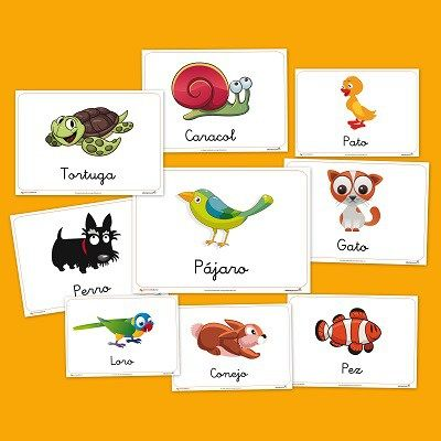 Animales-domesticos.jpg (400×400)