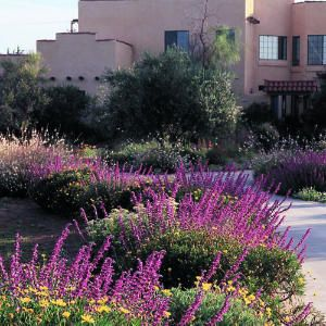 Water wisdom saves irrigation dollars   Style and practicality determined the design of this water-conserving garden in Clovis, California. For owner, the distinctively Southwestern house style suggested a less thirsty garden to match. But the real issues ― a costly water supply, serious soil problems, and the hot, dry summers of the San Joaquin Valley ― were the clinchers.