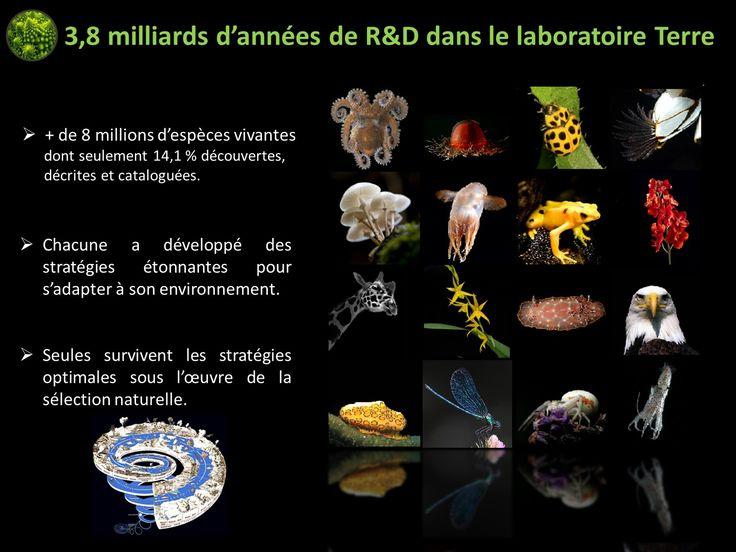 Biomimétisme  Idriss Aberkane