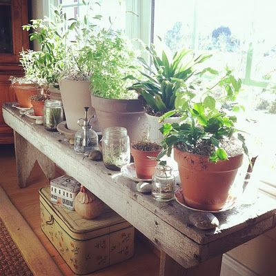Meer dan ideen over Indoor Window Garden op Pinterest