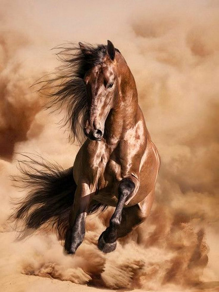 caballo personals I'm very serious in my sea - i honor god and help others i believe our personal relationship with jesus is the most important thing and then doing gods will for your life, knowing each of us all have a distinct calling.
