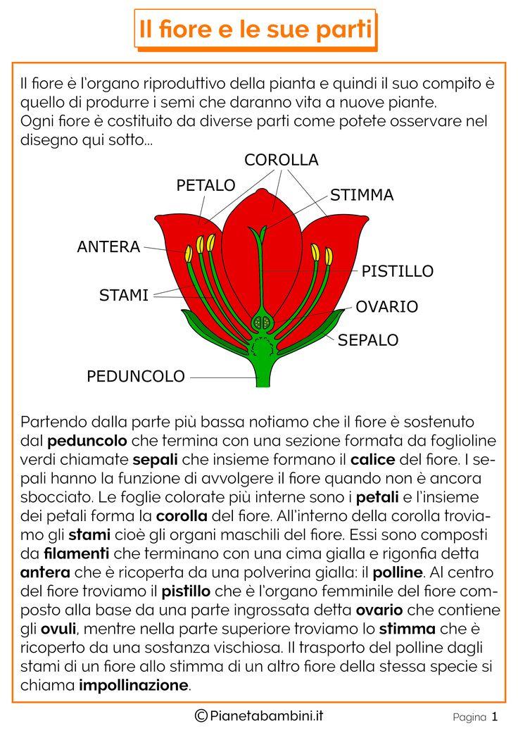 pianetabambini.it wp-content uploads 2016 05 Disegno-Parti-Fiore.png