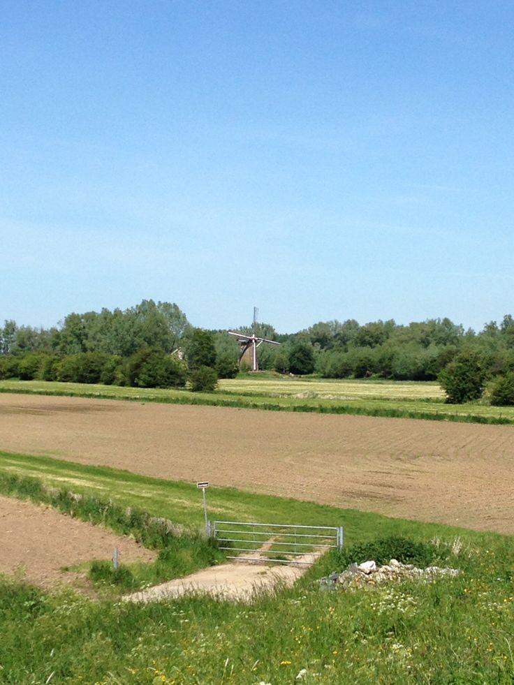 Molen in Rijswijk
