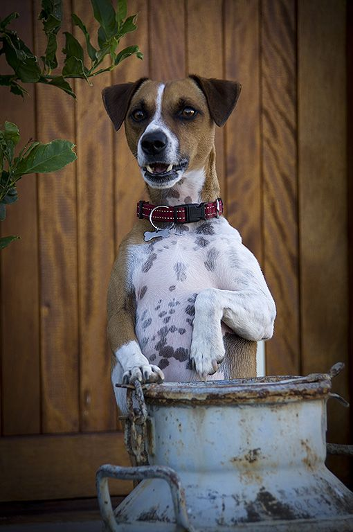 Jock of the Karoo who will welcome you when you arrive