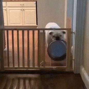 46 besten Hunde Dog Gifs & Videos Bilder auf Pinterest