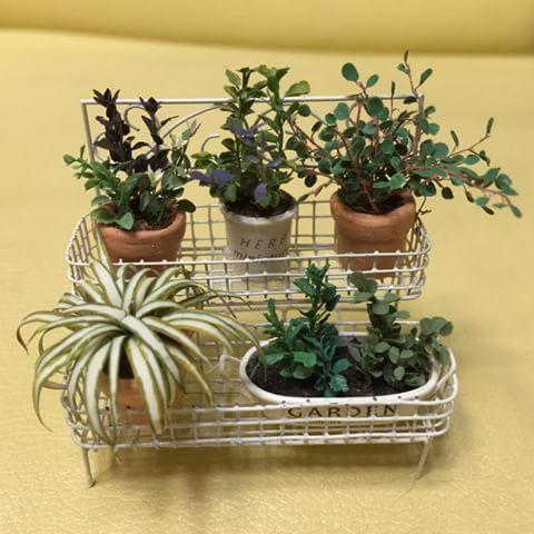 過去の作品です  N先生の教室で、ハーブ2種、オリヅルランを習い、後方3種は画像を探して真似てみたものです  植木鉢に初めて転写シールを使いました  転写シールの存在を知り感動(笑)  #ミニチュア#ハーブ#植物#オリヅルラン#ガーデニング#植木鉢#miniature#handmaid