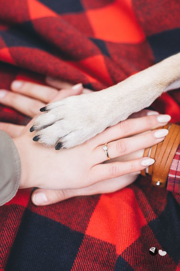 Cute engagement picture with beloved dog  Why engagement sessions are so important? http://bajkowesluby.pl/en/2016/04/11/do-you-need-an-engagement-session/  #dog #egagement #engagementsession #paw #ring #hands #emotions #love #bajkowesluby #wood #engagementring #love #coolenagegementideas #sessionwithdog