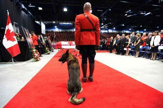 Heartbreaking Photos Of A Police Dog Saying Good-Bye To His Partner Who Was Slain By Moncton Gunman - BuzzFeed News