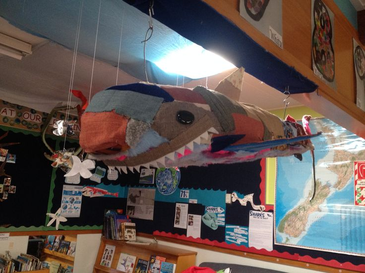 Mr. Chomp the only furry bellied shark that we are aware of lives happily at kindy.