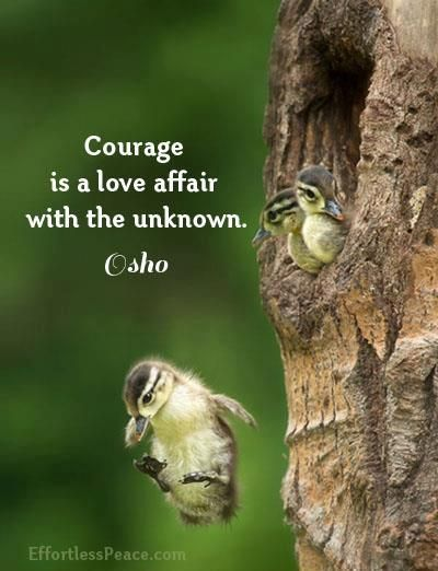 """""""Courage is a love affair with the unknown."""" ♥ ~ Osho by Effortless Peace (fb)"""