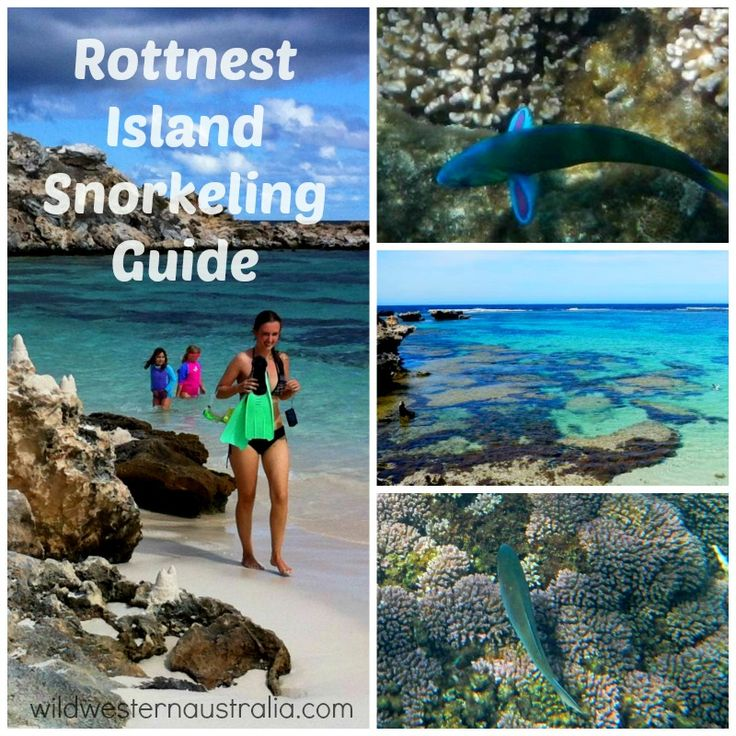 This page features my tips for finding the best spots for snorkeling at Rottnest Island.