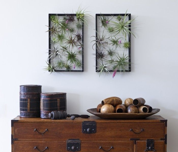Airplantman Vertical Garden Frames- To replace the succulents/moss idea with something that is even easier to keep up, air plants!