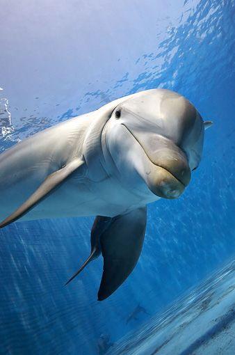 Hábitats | Oceanografic Valencia Web Oficial – Evita la cola de taquillas