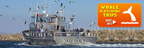 38 best images about summer vacation 2013 on pinterest for Los angeles fishing charters