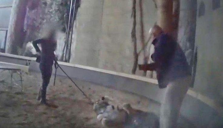 Zoo Filmed Beating Animals Shuts Its Doors For Good