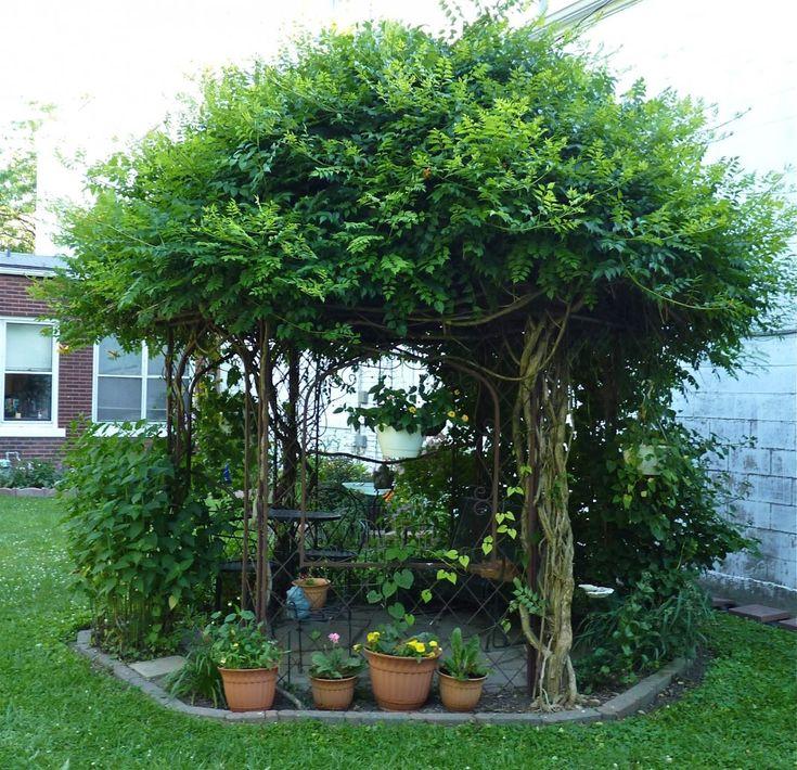 Беседка из живых деревьев с вьющимися растениями