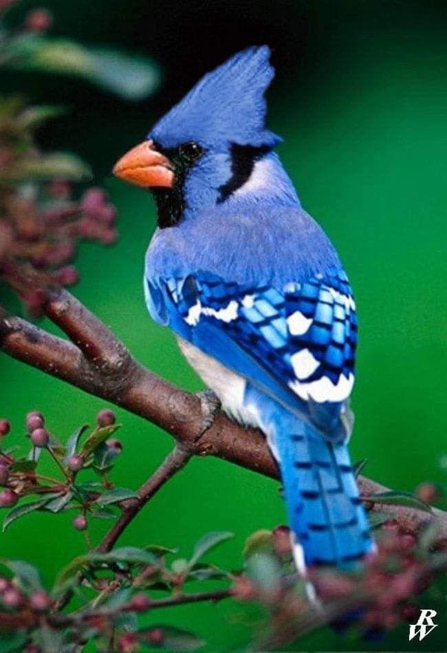 Duluth Mn Wild Creatures Colorful Birds Beautiful Birds