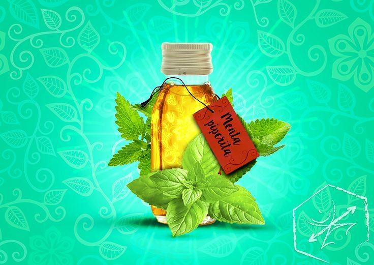 Para qué sirve la hoja de menta? Por qué muchas fórmulas para respirar contienen la menta piperita? Conoces estos 9 usos terapéuticos de menta piperita? Descubre más en: http://www.apotecaverde.com/blog