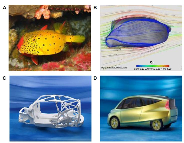 Figure 3 DaimlerChrysler's prototype bionic car (D), inspired by the box fish (A), skeleton structure of blowfish adapted for designing of vehicles (C), and tree growth patterns (B).