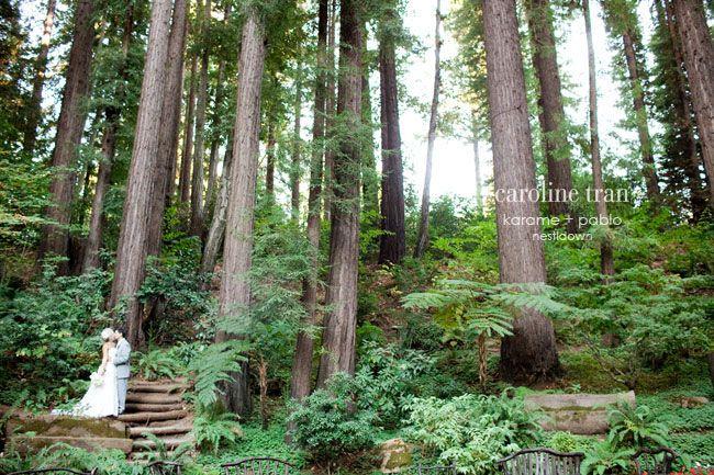a nestldown wedding amongst the grandeur of redwood trees