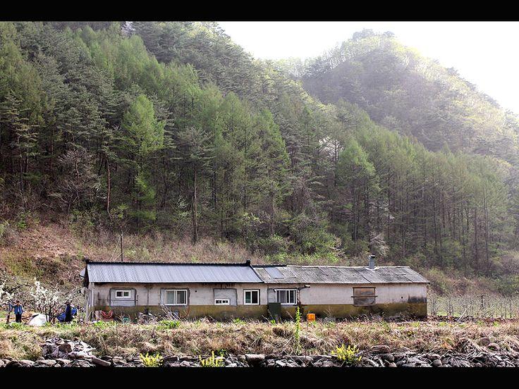 Spring_sunshine_farm_house - Andong, Gyeongsangbukdo - South Korea