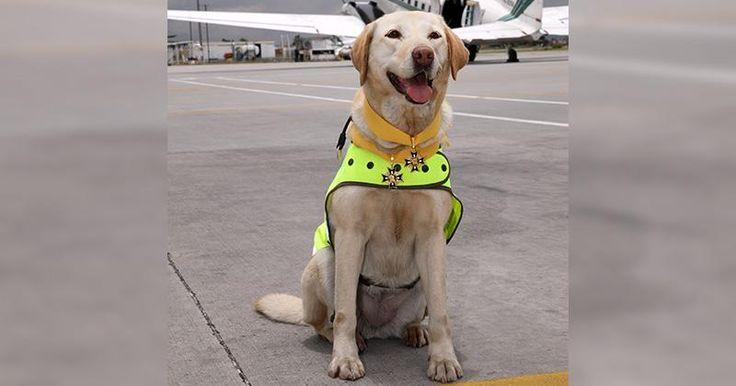Perros de la Policía Nacional que han sido héroes - Semana.com