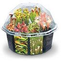 I'm obsessed...when can i own you?!    A desktop terrarium set that will grow ten varieties of insect eating madness!