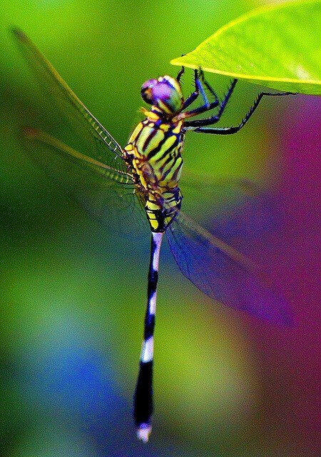 stunningly beautiful dragonfly