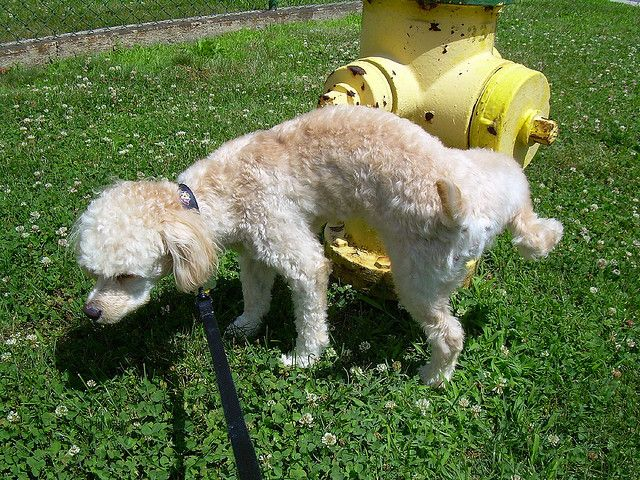 """The reality of owning a new puppy usually sinks in quickly. Use dog pee pads to get your puppy trained to not have """"accidents"""" all in your home!"""