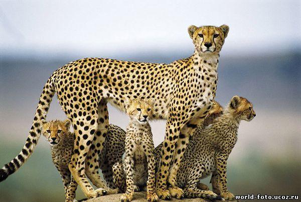 фото журнал о природе животные мамы и дети