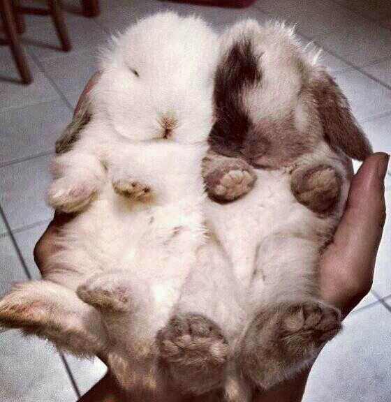 1000+ images about my bunny obsession. on Pinterest | A bunny ...