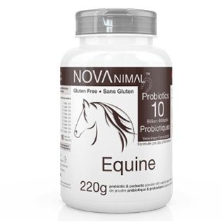 Probiotics for horses in natural plum-flavored powder. 10 Billion CFU per scoop.