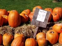 What Day is Halloween 2015? | The Old Farmer's Almanac