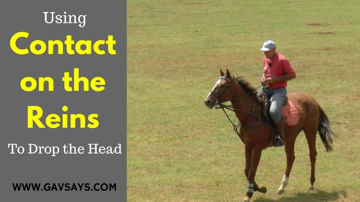 GavSays.com: Sometimes you have to use contact on the reins to get the right response. Here's a horse that goes high into the bridle to avoid pressure. Take a look at the solution...