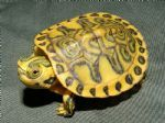 Hypo Pastel Yellow Bellied Turtle