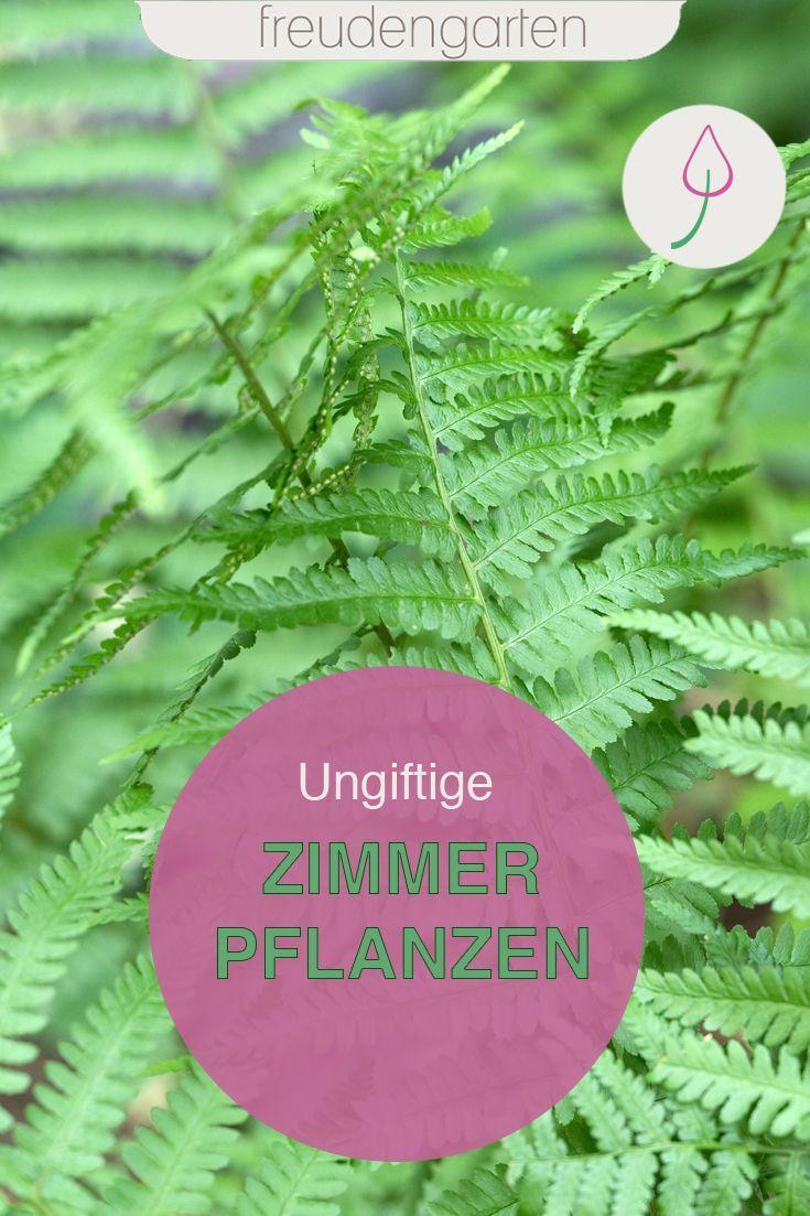 Ungiftige Zimmerpflanzen Ungiftige Zimmerpflanzen Pflanzen Und