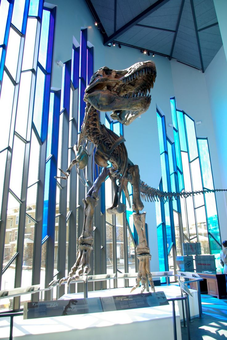 Prairiefire is designated by the State of Kansas and the City of Overland Park as a major tourism destination due to its anchor attraction--the American Museum of Natural History Exhibitions.