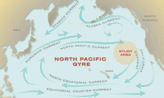 I pescatori del Pacifico del Nord mostrano prove: pesci con tumore, contaminati da radioattività
