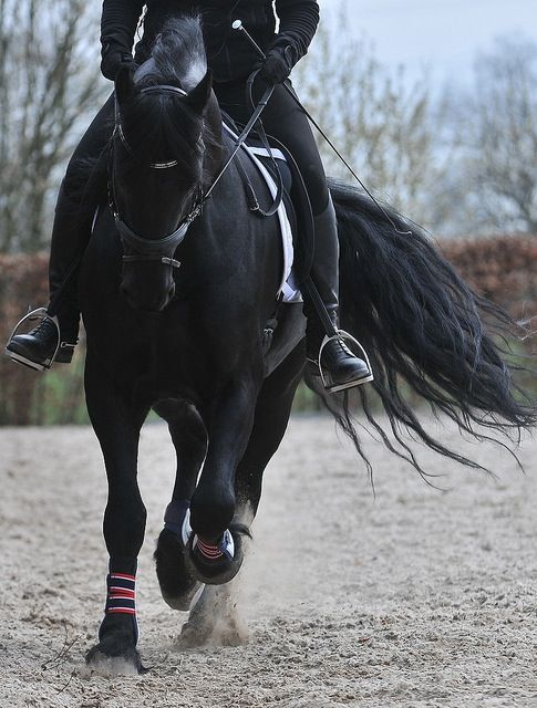 horse happiness = the thud of hooves, a swish of a tail.