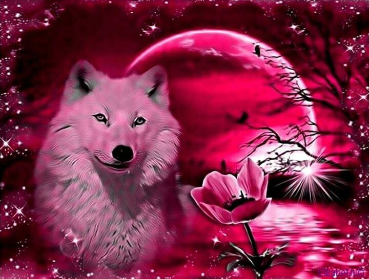 Cool wolf pic.. Things I love Pinterest