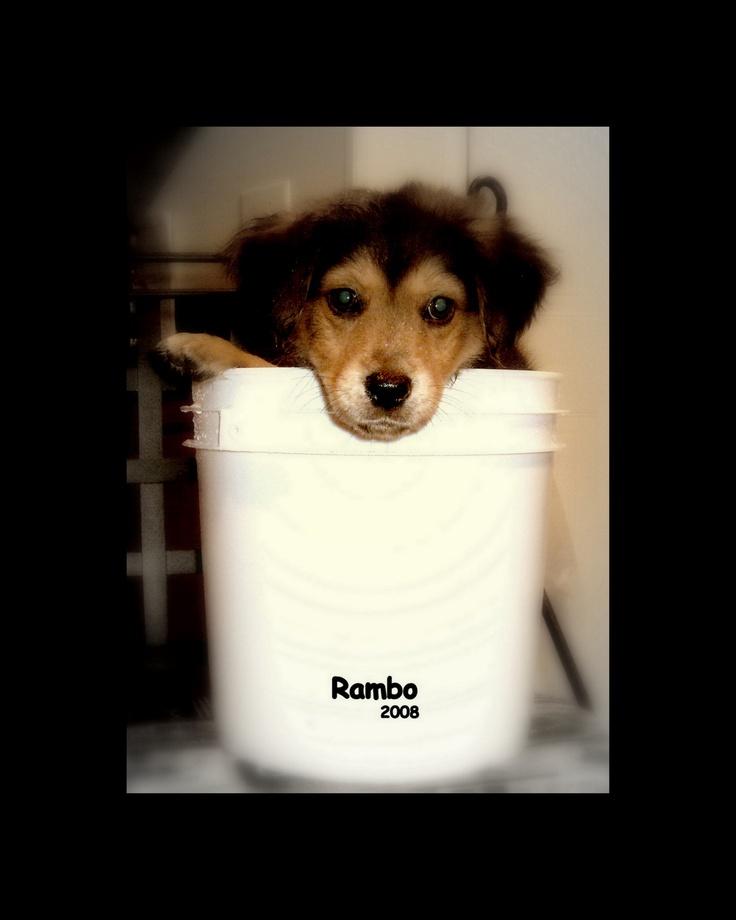 Rambo, as a pup