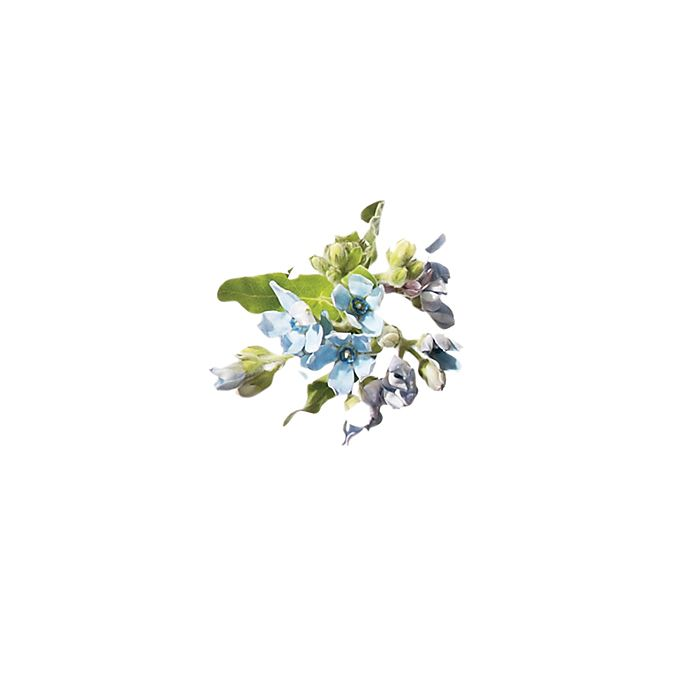Brides.com: . Tweedia. Besides hydrangea, tweedia is the only flower that comes in this shade of sky blue. It also comes in white.