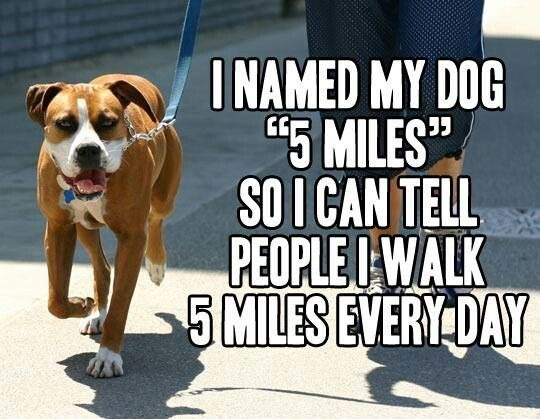 Except I don't even get out to walk my dog every day.