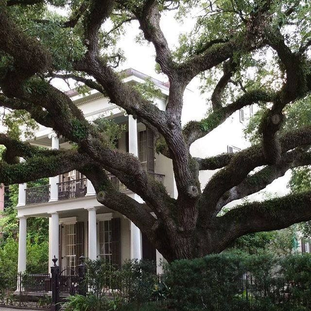 320 Best New Orleans Garden District Images On Pinterest | Southern Charm, New  Orleans Louisiana And French Quarter