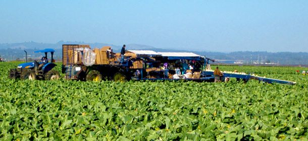 In Monterey Bay, an Agricultural Tech Cluster Blossoms