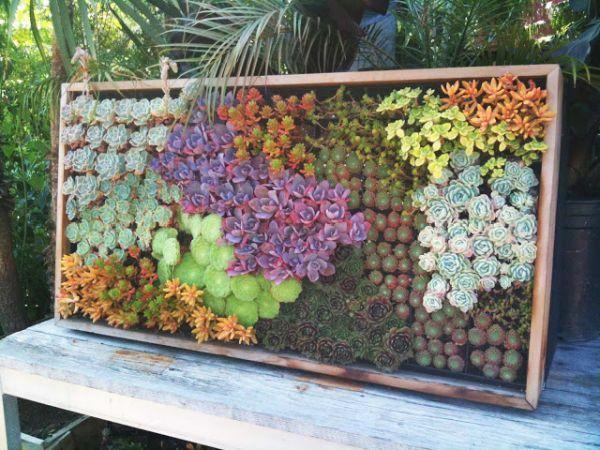 ber ideen zu vertical succulent gardens auf pinterest sukkulenten sukkulentengarten. Black Bedroom Furniture Sets. Home Design Ideas