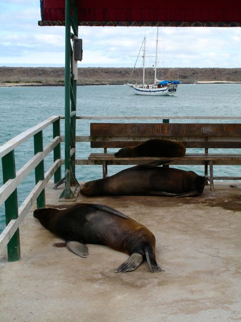 Yes, we agree, waiting for public transport is very boring even in the Galapagos Islands. For more fun travel pics visit our website www.suitcasesandstrollers.com #GoogleUs #suitcasesandstrollers #travel #travelwithkids #familytravel #familyholidays #familyvacations
