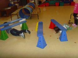 Activités gymniques : ramper et quadrupédie.