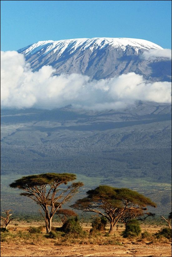 Tanzanie - Kilimanjaro                                                       …